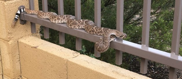 10 Important Things to Look for in a Rattlesnake Fence Provider — The Definitive Buyer's Guide to Snake Fencing