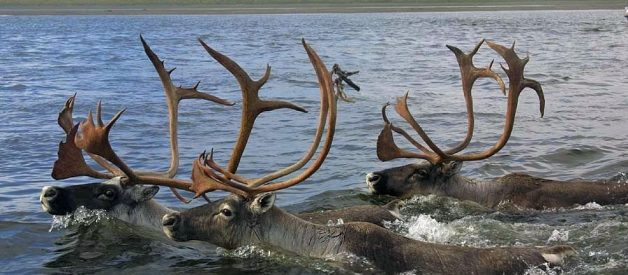11 Facts About Antlers