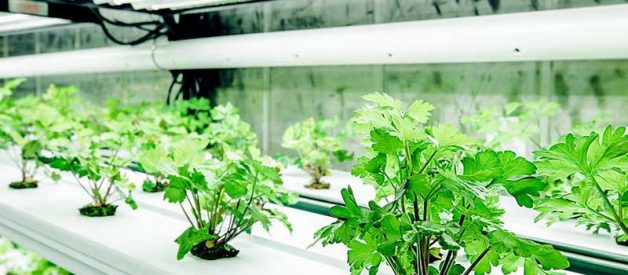 15 Stats About Hydroponic System Costs