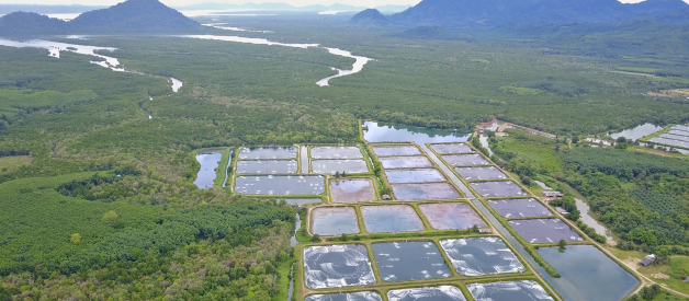 4 Best Countries to Get Your Farmed Shrimp