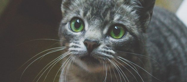 5 Purrfect Benefits of CBD for Cats