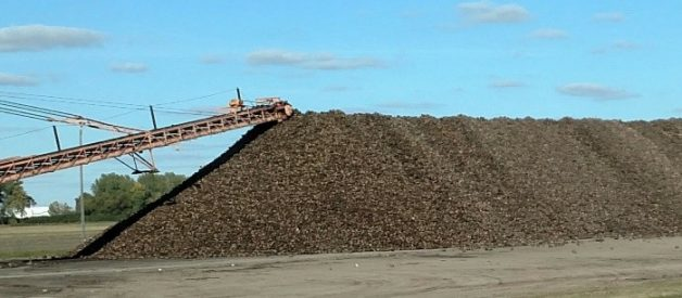 5 Things To Know About Sugar Beets