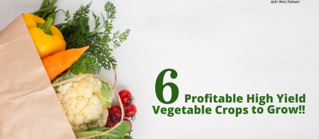 6 Most Profitable High Yield Vegetable Crops to Grow!!