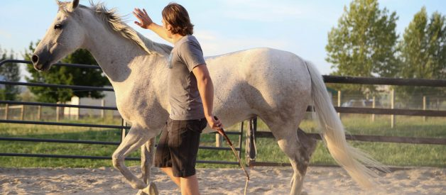 Beginners Guide to Natural Horsemanship — by Don Jessop