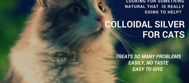 Can Colloidal Silver Be Used For Cats Health?