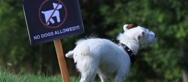 Don't Pee on That! How to Stop Dog Marking Behaviours