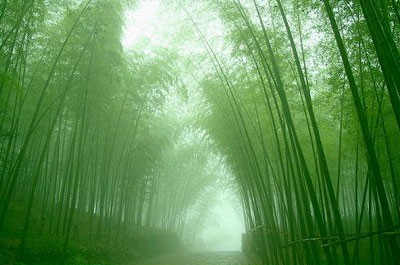 Growing Your Bamboo Tree — A Parable On Patience Perseverance And Success