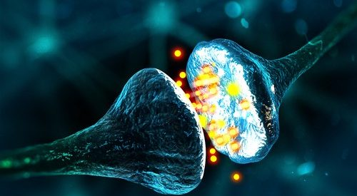 Hormones and Neurotransmitters: The Differences and Curious Similarities