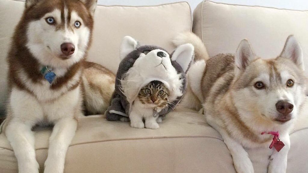 This is a cute cat pretending he?s a dog