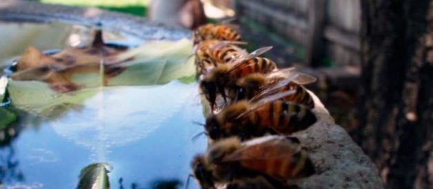 How to Get Rid of Sweat Bees Around a Pool