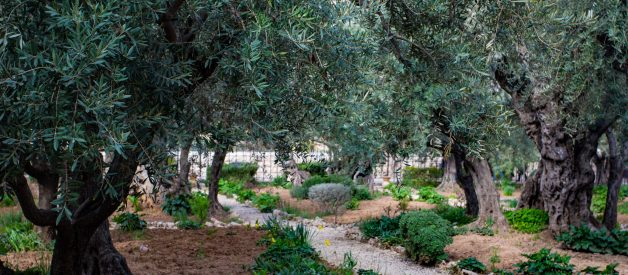 In the Garden of Gethsemane, Jesus Embraced Fear and Sadness