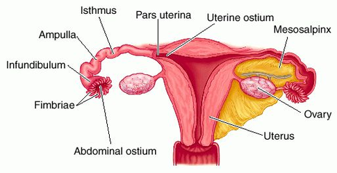 Is it possible to get pregnant without a uterus?