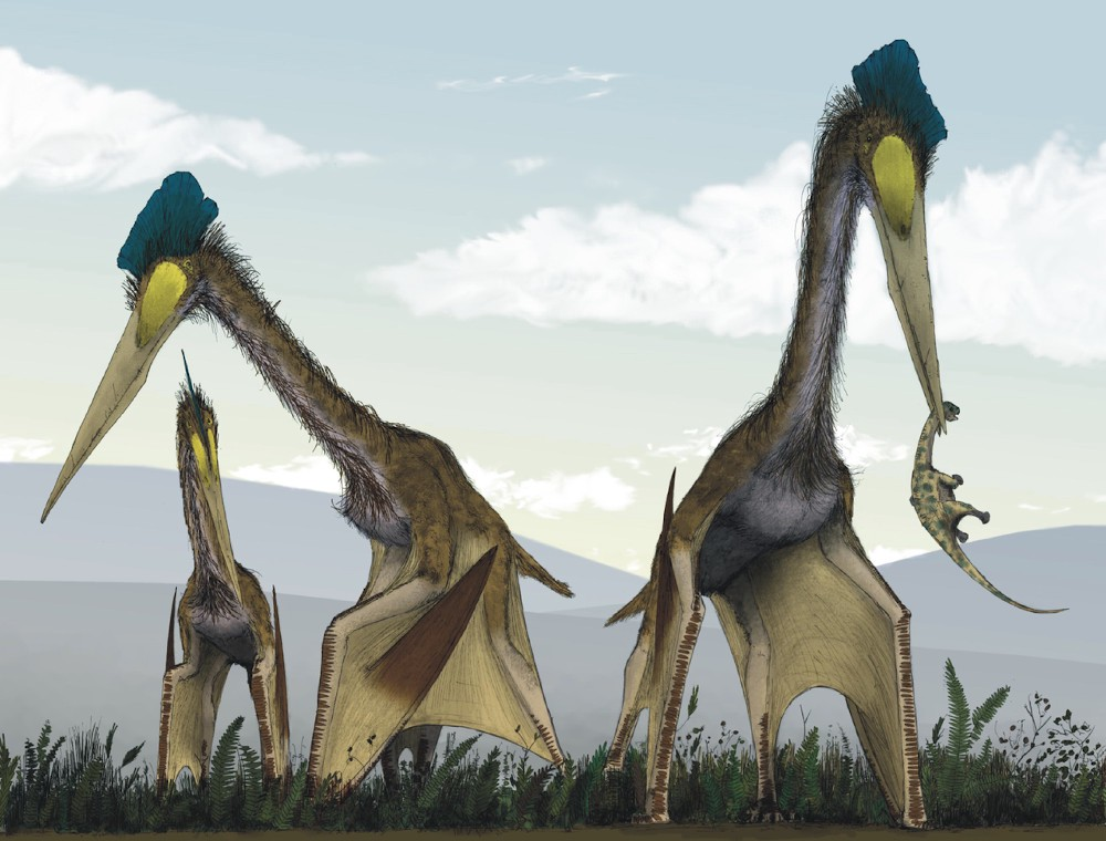 Just How Big was the Largest Flying Dinosaur?  Huge.
