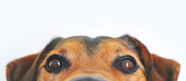 My Dog Sees Dead People