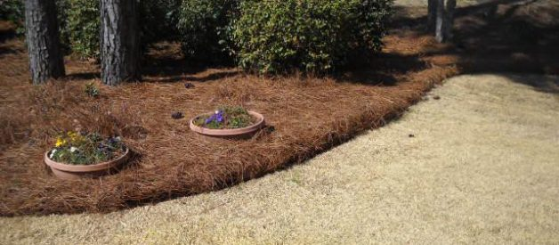 Pine Straw 101: A Beginner's Guide to One of the Southeast's Most Popular Ground Covers