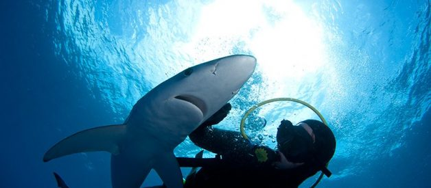 Shark dreams: what do they mean?
