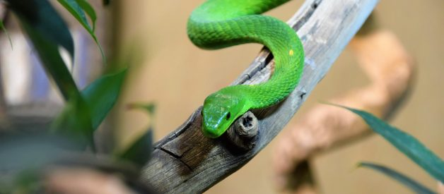 Simple Snake game in HTML and JavaScript