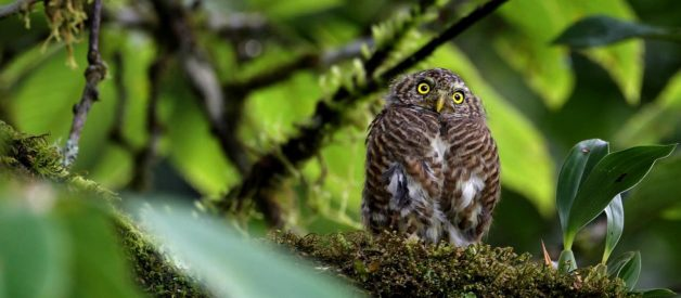 The Owl in India — Facts, Stories, and Myths
