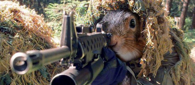 To kill squirrel with a Pellet Gun select pellet carefully