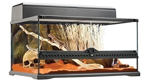 Top 5 Best Bearded Dragon Enclosures That Your Beardie Will Love