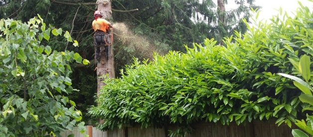 Tree Surgeon VS Arborist: What's The Difference?