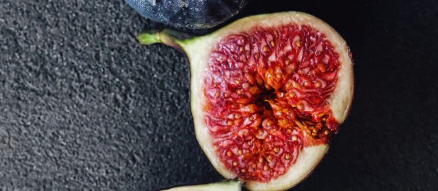 Was Jesus Hangry When He Cursed the Fig Tree?