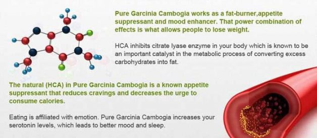 What Does Dr. Oz Say About Garcinia Cambogia? It's Hard To Believe!