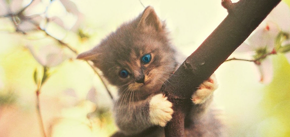 """Whatever Happened To…The """"Hang In There"""" Kitten?"""