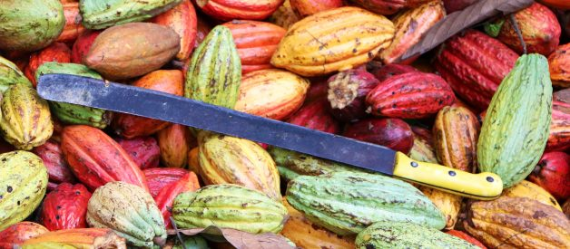 What's Wrong With Cacao Farming?