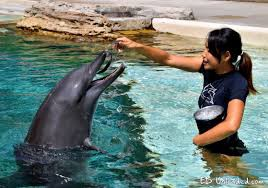 Photo of trainer feeding dolphin