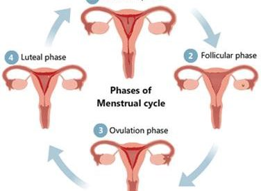 WHY DO WOMEN HAVE BACK OR PELVIC PAIN DURING THEIR PERIODS?