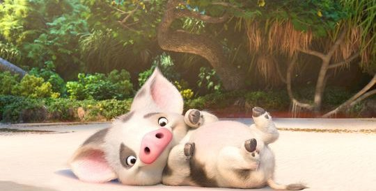 Why The Pig In Moana Stayed Behind : 9 Conspiracy Theories